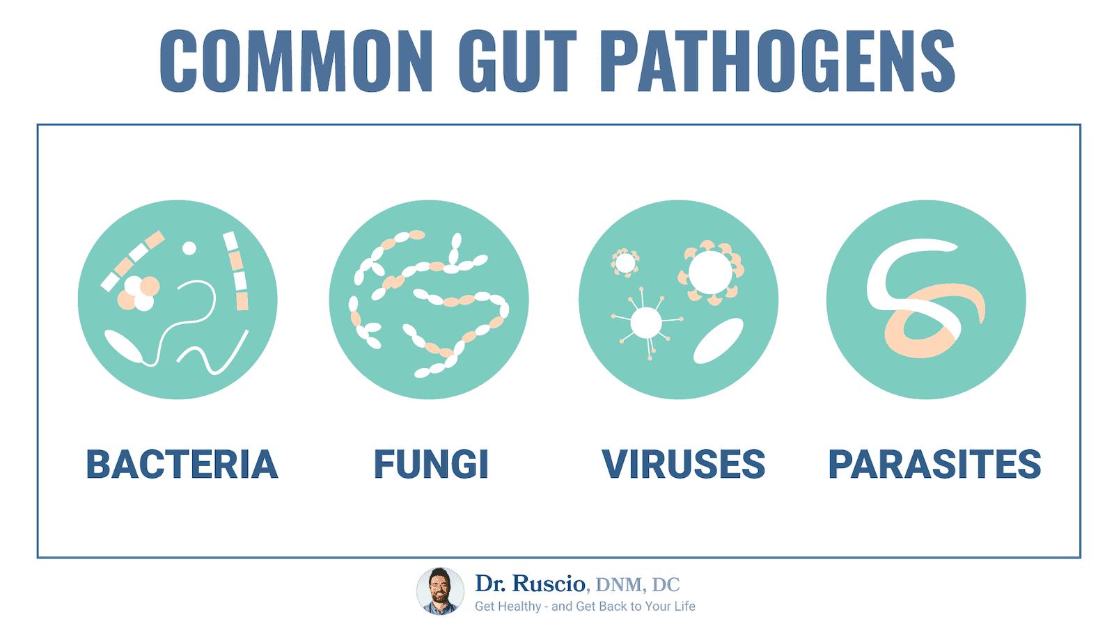 common gut pathogens