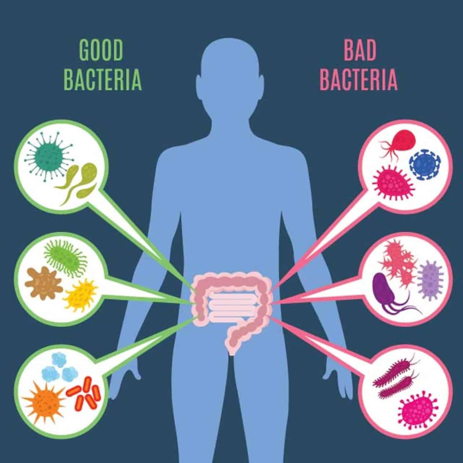 integrative health: good and bad bacteria classification