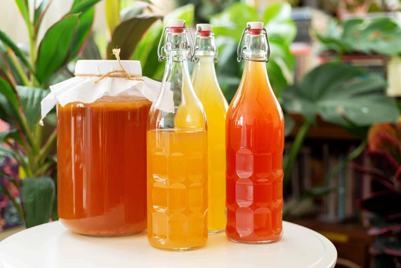 What are probiotics: homemade Kombucha tea in glass bottles